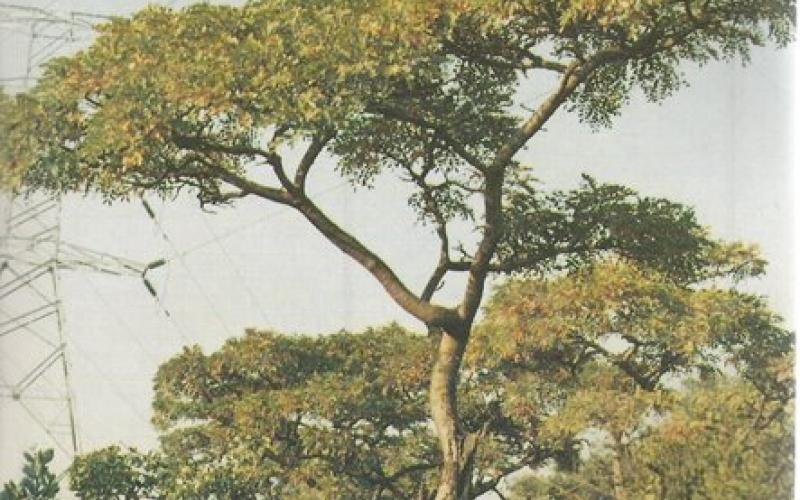Front Cover of  Eskom Tree Identification Guide-Transvaal by Piet van Wyk