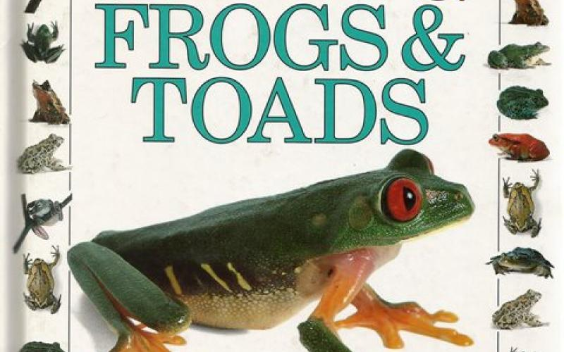 Front cover of Amazing Frogs and Toads by Barry Clarke