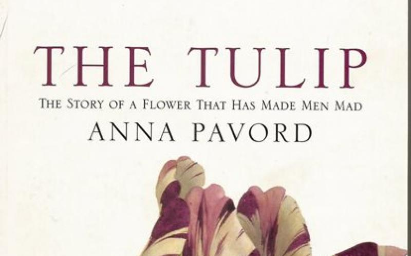 Front cover of The Tulip by Anna Pavord