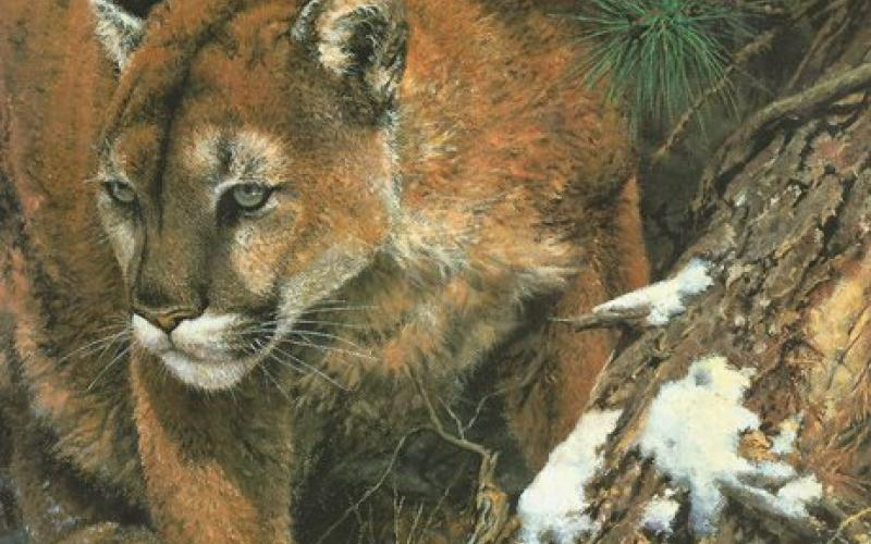 Front Cover of Wildlife Painting by Susan Rayfield