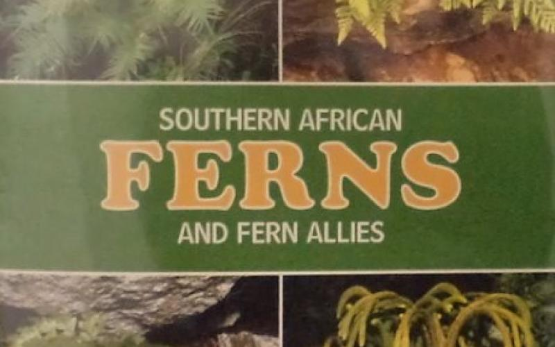 Front cover of Southern African Ferns and Fern Allies by J. E. Burrows